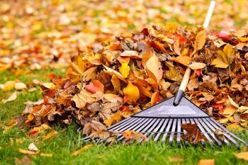 Fall Clean Up services in Centenary South Carolina