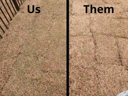 LEFT: sod laid by Vets 4 U - RIGHT: sod laid by another company.This is the difference between not only quality but price. The grass is almost all brown because of the dormant season currently, but the gaps and crooked lines in the sod to the right speaks for itself! That grass is never going to grow into a smooth lawn. For sod installation done properly and professionally, call the experts at Vets 4 U! (1)